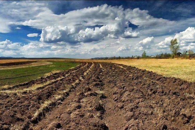 Прийди 31 травня на сесію Житомирської облради – зупини земельне свавілля