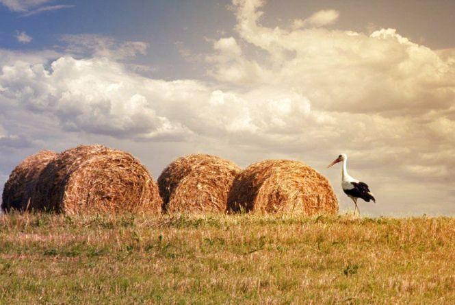 На Житомирщині жнива: вже зібрано 26 тис. тонн зерна