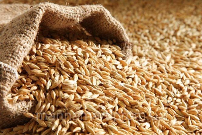 Аграрії області намолотили 57 тис. тонн зерна