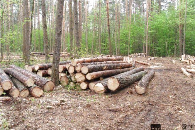 Сучасна Житомирщина:лісовий «безпредєл» на грунті дрімучого пофігізму?