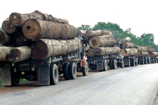 Глава Уряду ініціює масштабні перевірки лісгоспів на предмет контрабанди лісу і підписав звернення до Генпрокуратури про перевірки фактів порушень
