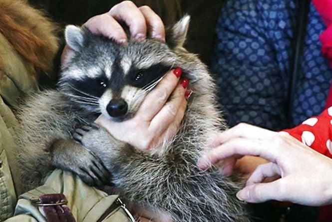 Житомиряни просять захистити тварин