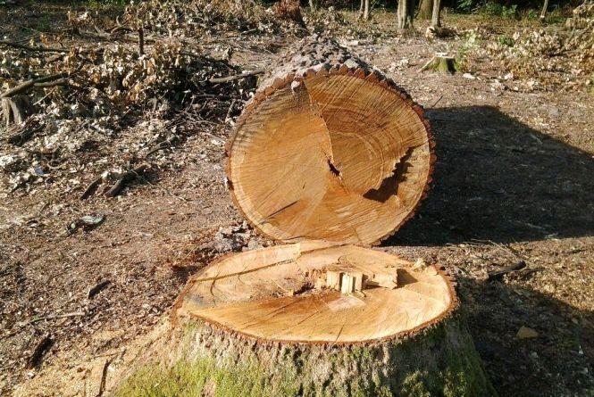 На Житомирщині розпочалася перевірка лісових господарств