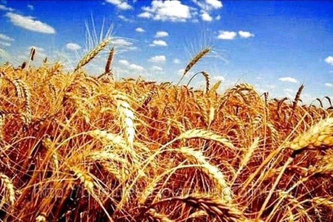 У 4 районах Житомирщини завершили збір ранніх зернових культур