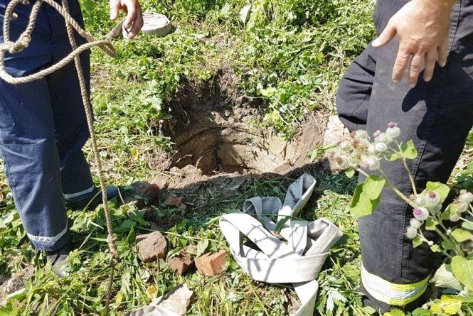 Врятували лоша: тварину з 4-метрового колодязя витягали 5 рятувальників
