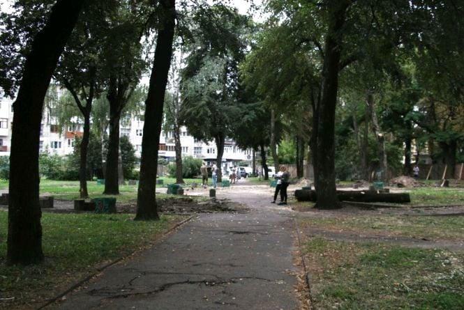 У сквері на Лятошинського замість зрізаних дерев посадять нові
