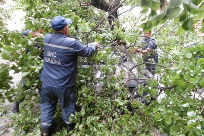В Олевському районі повалене дерево заблокувало рух