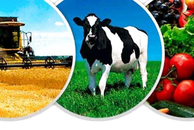 Житомирщина увійшла в п'ятірку кращих за виробництвом сільгосппродукції
