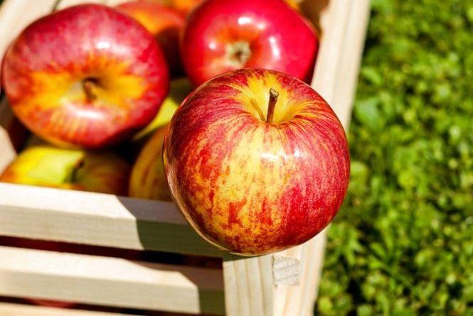 Плодовий прорив: хто купує українські яблука