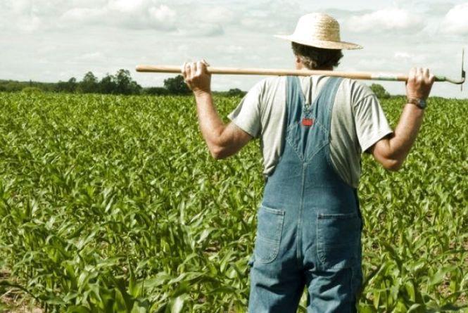 Як легалізують сімейні ферми?
