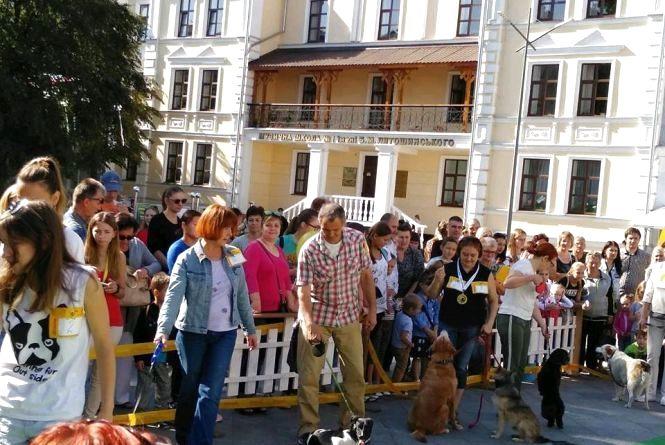 У Житомирі визначили переможця конкурсу безпородних собак «Мокрий ніс»