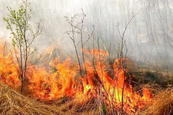 За добу вигоріло 2 гектари сухої трави та ліквідовано 3 пожежі сміття