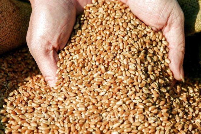 На Житомирщині зібрали 1 млн 320 тис. тонн зернових