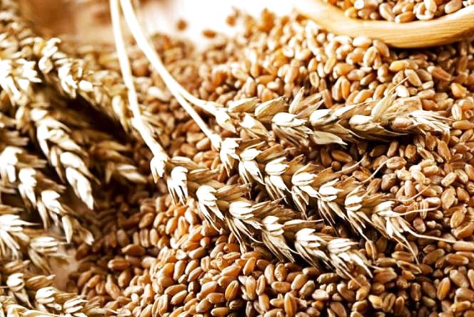 На Житомирщині намолотили понад 1,6 млн тонн зерна