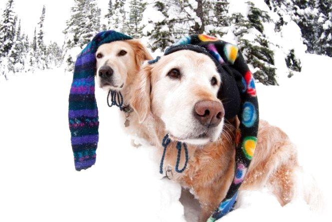 Обов'язково одягайте шапку: очікується зниження температури повітря