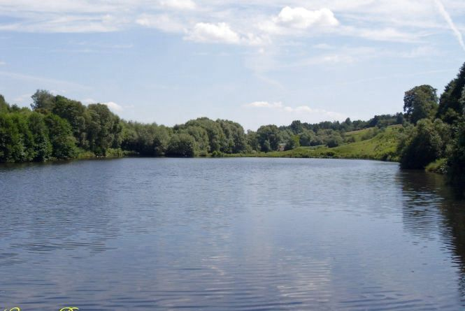 На Житомирщині припинено незаконне використання земельної ділянки та ставу
