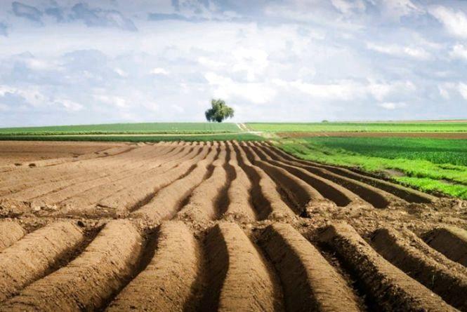 Цьогоріч до експертів Держгеокадастру у Житомирській області надійшло на погодження 11,8 тис. проектів землеустрою