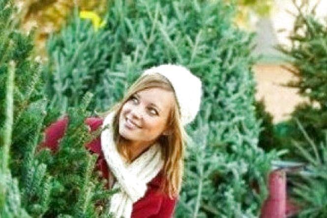Скільки коштуватиме цьогоріч новорічна ялинка