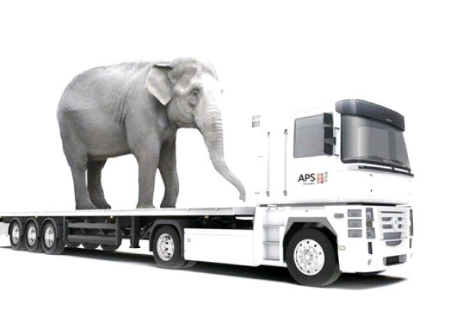 1 тис. євро штрафів: таку суму сплатять перевізники за порушення норм вантажоперевезення