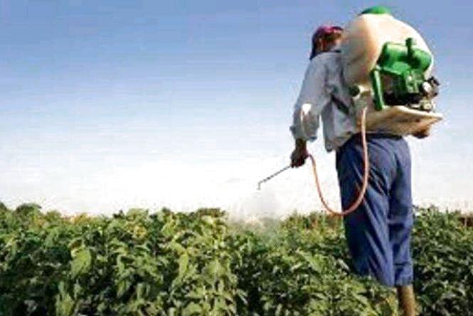 Ситуація із застосуванням пестицидів на території області є задовільною та контрольованою - результати досліджень