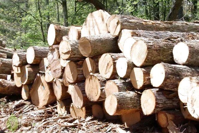 За незаконне вивезення лісоматеріалів передбачено кримінальну відповідальність