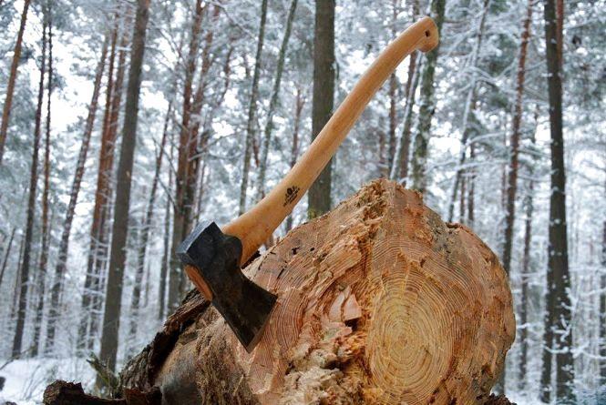 У Чуднівському районі під час валки дерева загинув чоловік