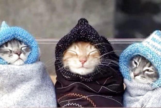 Відзавтра у Житомирі розпочнеться поступове похолодання