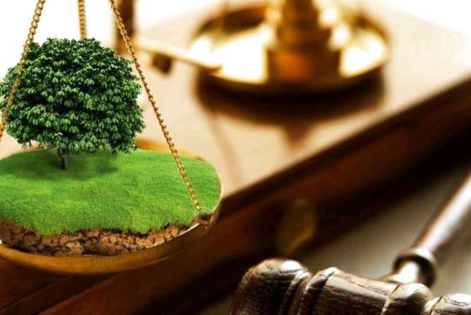 Земельний конфлікт: житомирянин оббиває пороги у пошуках правди