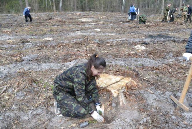 На Житомирщині готуються навесні посадити 5750 гектарів лісу