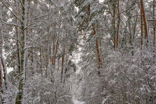 На Олевщині поліцейські врятували дідуся, який заблукав у дрімучому лісі