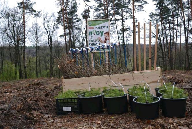 Цього року на Житомирщині висадять 23,5 мільйона дерев