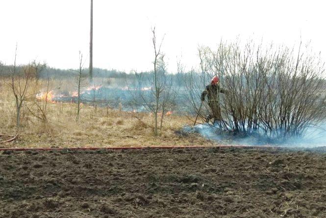 Житомирська область: за добу вогнеборцями області ліквідовано 4 загоряння минулорічної сухої рослинності