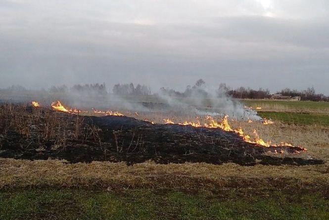 Житомирська область: за добу вогнеборцями області ліквідовано 8 загорянь минулорічної сухої рослинності