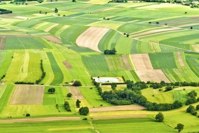 Понад 300 тис. грн щорічно надходитиме до бюджетів Житомирщини від продажу прав оренди на земельні ділянки в лютому 2019 року