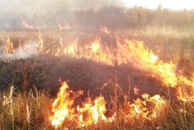 У Чуднівському районі господар спалював бур'ян і  ледь не спалив обійстя