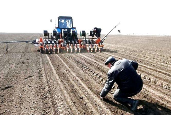 Майже 40% ранніх зернових посіяли на полях Житомирщини
