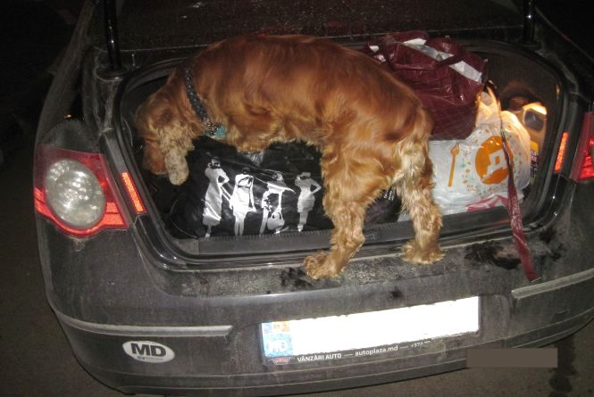 Службовий собака допоміг прикордонникам знайти в багажі молдованина психотропи