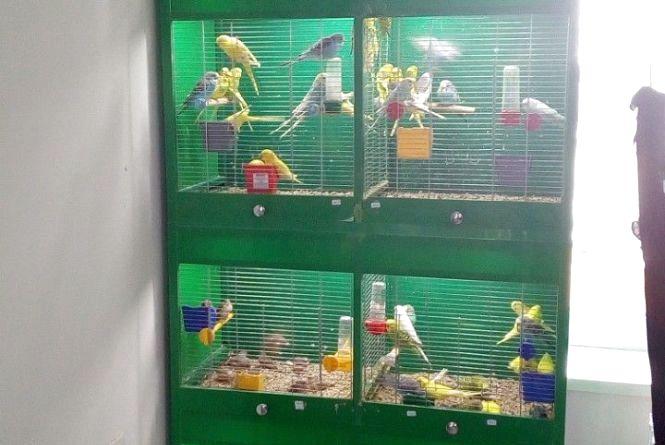 Митники розповіли про стан вилучених на кордоні папуг