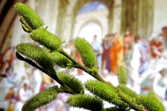 Вербна неділя 2019: значення свята, традиції та прикмети, які зцілюють