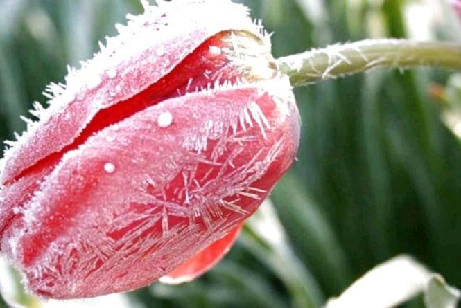 Синоптики знову попереджають про заморозки