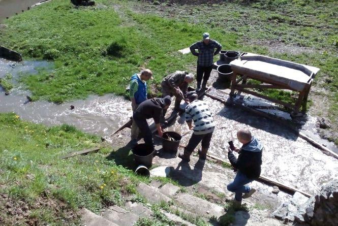 У Бердичівське водосховище випустили біля 4 тонн черкаського товстолоба