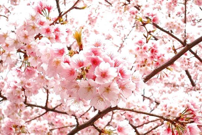 Рок-фестиваль WoodStock, Японська весна та Бальзак-220 – найочікуваніші культурні події на Житомирщині