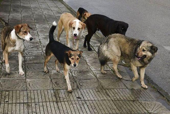 """Житомирські волонтери: «Стерилізація – гуманний спосіб регулювання кількості бездомних тварин"""""""