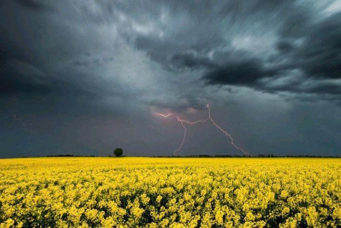 Дощі і грози, місцями сильні, температура — до 24 тепла, — прогноз Житомирського гідрометцентру