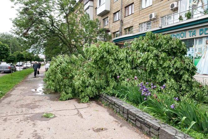 Повалені дерева та пошкоджені електромережі: Житомир ліквідовує наслідки нічної негоди