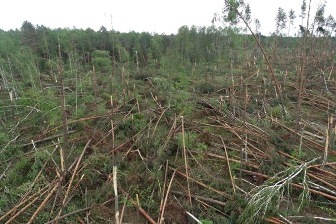 Наслідки буревію з поваленням лісу у Новоград-Волинському та Ємільчинському районах визнали надзвичайною ситуацією