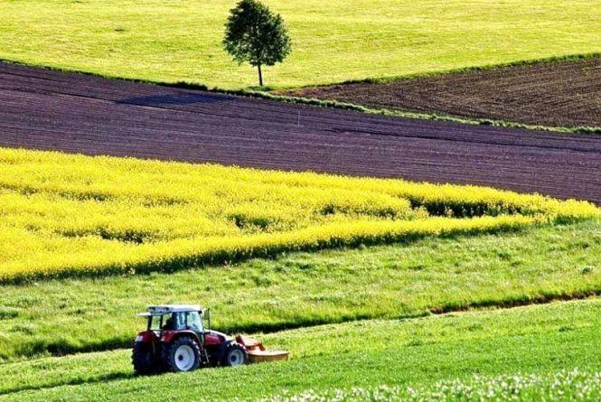 У червні землевпорядники Житомирщини запропонують інвесторам придбати права оренди на понад 260 гектарів землі