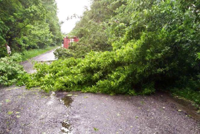 На Житомирщині негода викорчовує дерева і ускладнює дорожній рух