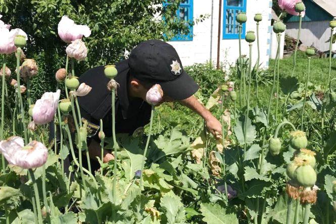 На Житомирщині буяють посіви маку й конопель: селяни не бачать в цьому нічого протизаконного