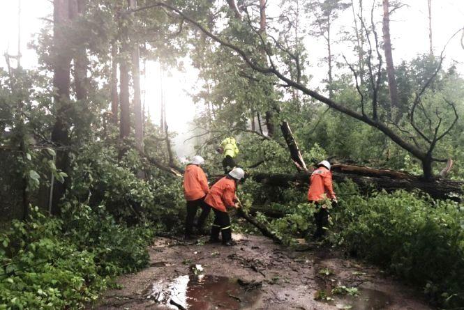 Негода повалила чимало дерев: рятувальники ліквідовують наслідки